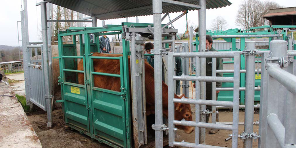 Formation Production Animales